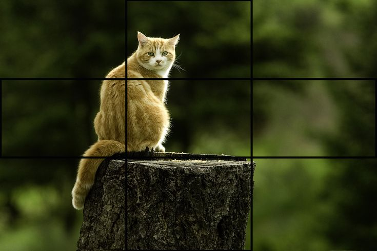 the rule of thirds document design