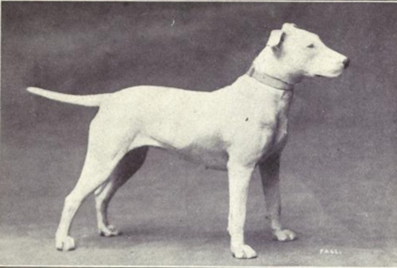 what is the first documentation of dogs